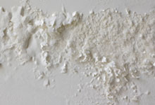 Victoria drywall mold removal